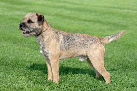 Non Shedding Dog Breeds Which Breeds Shed Least Hair Dog