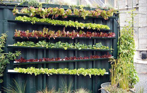 Gutter garden. vertical garden, small space.
