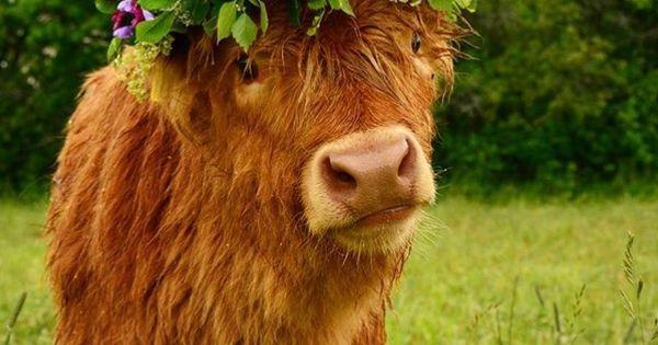 Cow in flower crown | animals | Pinterest | Flower crowns ...