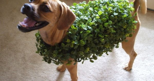 Chia pet pets and halloween costumes on pinterest