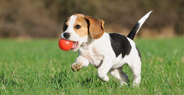Amazon Com Dogs Pet Supplies Apparel Accessories Collars Stinky Dog Puppy Training