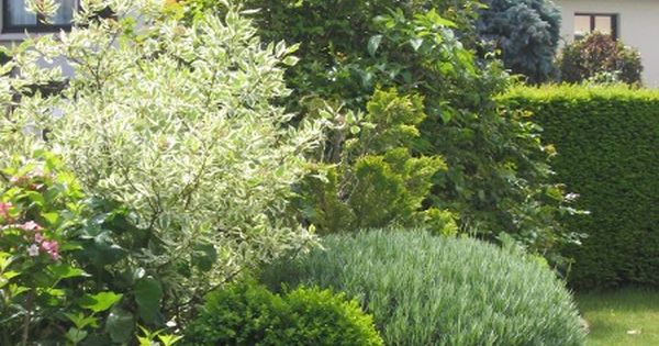 Massif d 39 arbustes pour haie basse idees jardin for Arbuste interieur maison