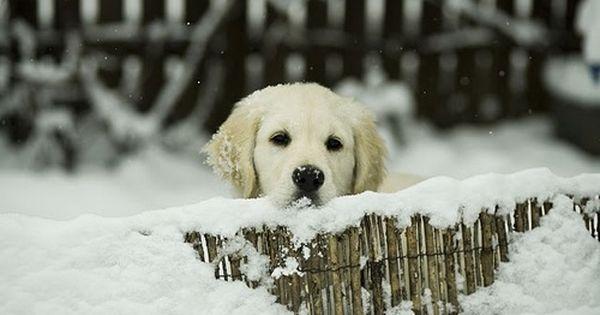 snow snow snow puppy puppy puppy