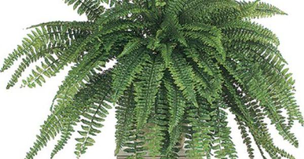 Purificacion de aire airlife te dice las plantas absorben for Plantas de purificacion