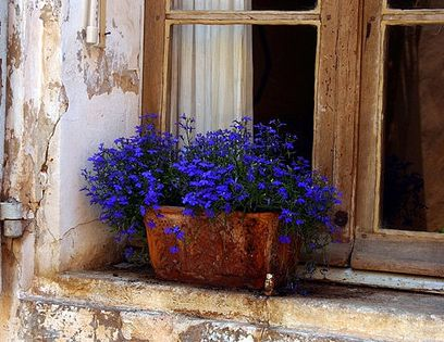 Blue flowers brighten up an old window