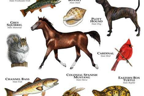Nc State Prints North Carolina State Animals Fine Art Print Animals Animal Posters Black Forest Animals