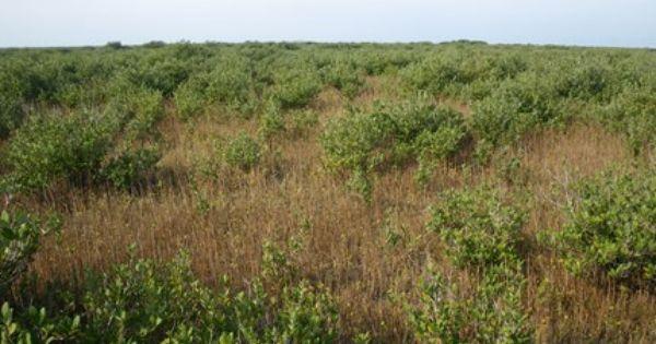 Gulf Coast Vulnerability Assessment Coast Gulf Coast Texas