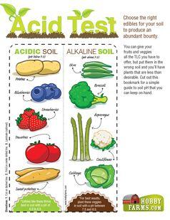 Soil Ph Organic Vegetable Garden Home