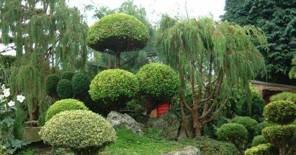 Jadin japonais avec des arbres sculpt s fleurs jardins for Arbres jardin japonais
