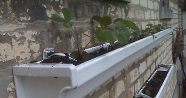 Rain gutter strawberry planters very clever idea horto for Rain gutter planter box