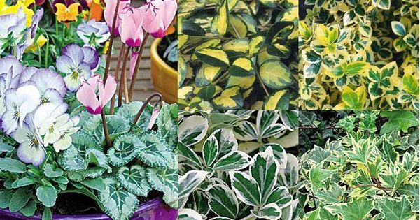 pot e d 39 automne des fleurs et feuilles panach es fleurs plantes pinterest les fleurs. Black Bedroom Furniture Sets. Home Design Ideas