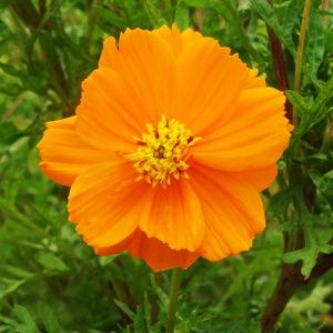 A Wow Worthy List Of 20 Orange Flower With Names Facts And Pictures Gardenerdy Orange Flower Names Orange Flowers Flowers