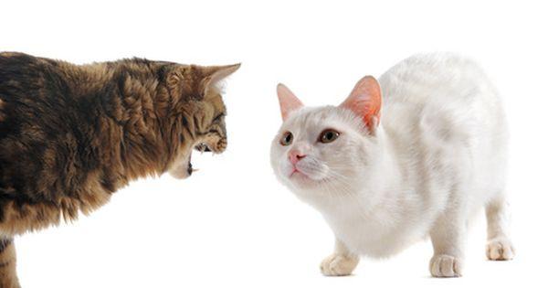 Cat Behavior Cat Behavior Dog Behavior Animal Behavior