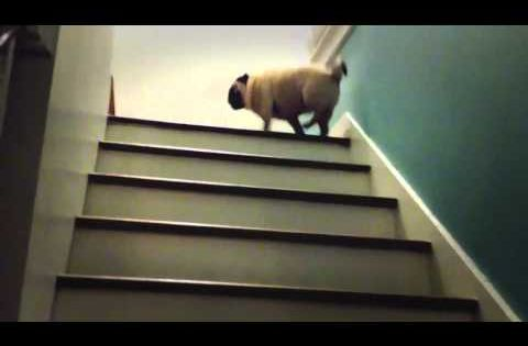 Magic Pug - The Stairs Are Lava; this made me giggle :)