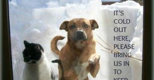 please bring dogs inside during cold weather  don u0026 39 t leave them out in the yard  it u0026 39 s dangerous