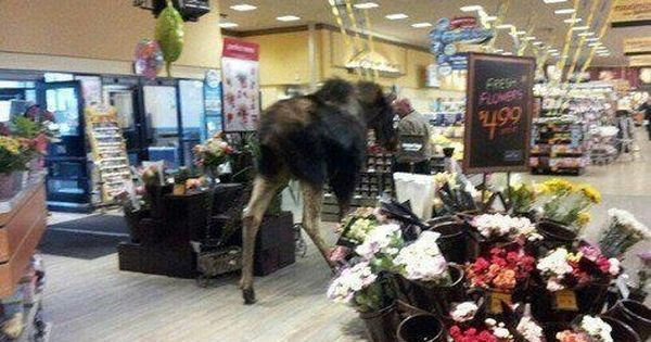 27 Crazy Things That Can Only Happen In Alaska | Grocery store, Sweet ...