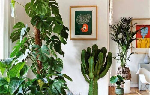 Indoor plants and palms office plants cool plants using plants for architecture ideas - Cool office plants ...