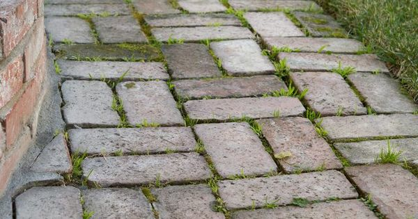 How To Remove Mold Amp Algae From Brick Pavers Remove Mold