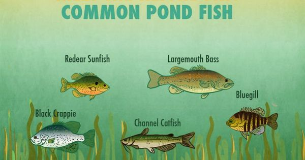 Small pond fishing simple tips to help you catch more for Pond fishing tips