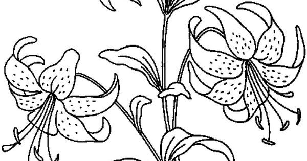 Realistic Flowers Coloring Pages Print Flower Coloring