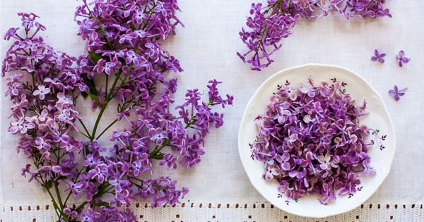 Lilac Simple Syrup | edible flowers & recipes | Pinterest