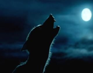 Werewolfproblems Werewolf Aesthetic Remus Lupin Werewolf Harry Potter Aesthetic