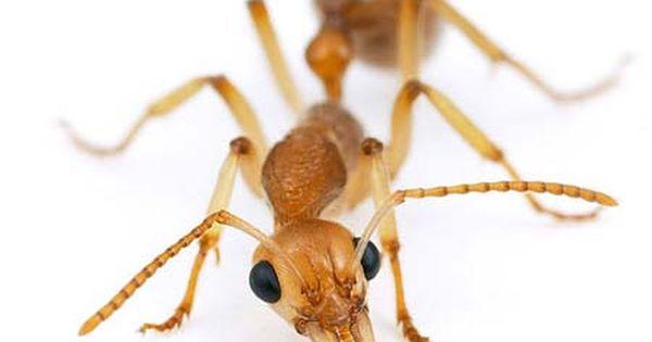 Pin Em Kinky Bugs