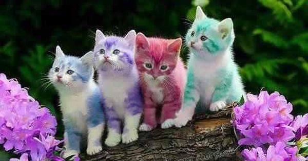 اجمل الصور في العالم 2017 اجمل الصور في الدنيا جديدة 2018 صور و خلفيات الوليد Rainbow Kittens Kitten Wallpaper Pets