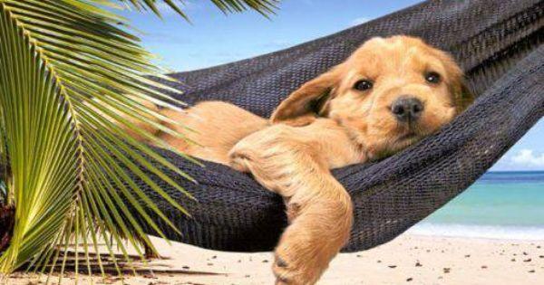 Pin By Rachel Condorelli On Apenas Porque Me Faz Feliz Animals Dogs Pet Dogs