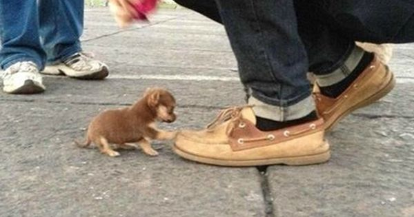 Worlds smallest dog