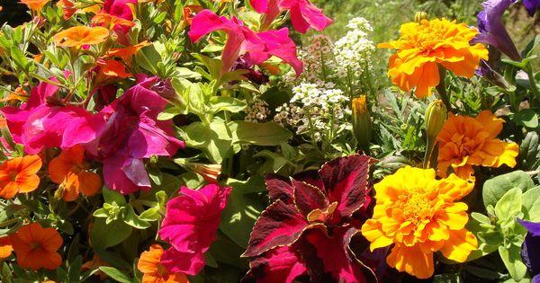 Pin By Barbra On Taras Weranda Balkon Plants