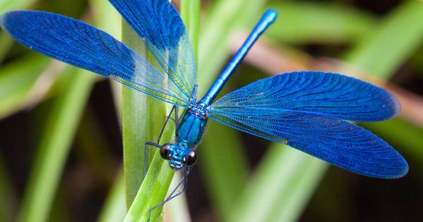 beautiful dragonfly images - Google Search