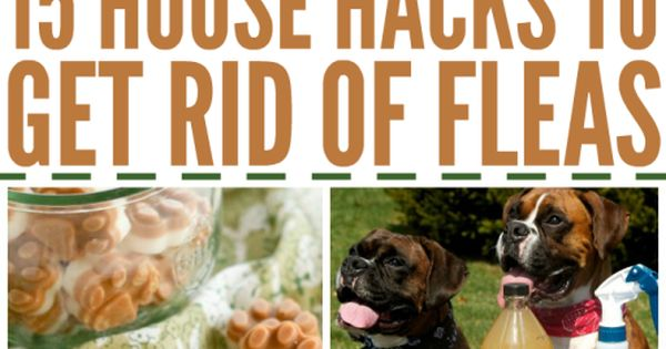 how to get rid of fleas in the house diy