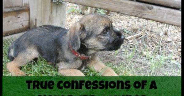 True Confession Of A New Puppy Owner Puppy Owner New Puppy Puppies