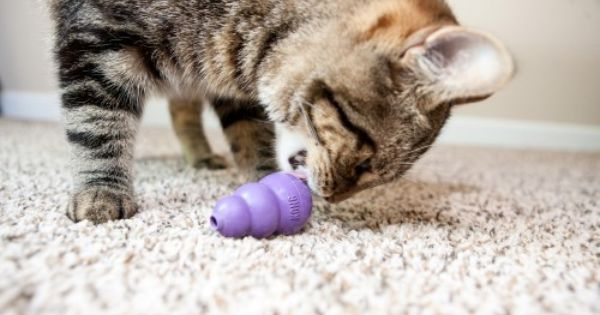 Kitty Kong Helps Cats Get Along Cat Help Canadian Cat Cats