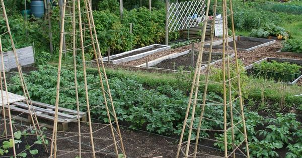 6 Bamboo or Branch Tomato Cages Projects & Videos. Now that's a