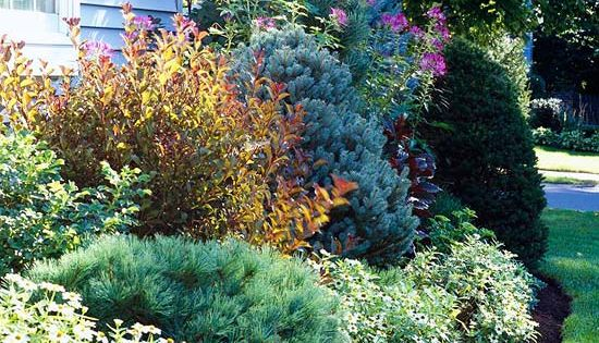 Because they keep their foliage all winter, low-growing evergreens are perfect for