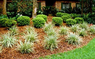 Low Maintenance Landscaping Mass Planting Of Only A Few Different
