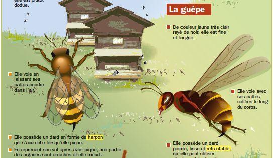 connais tu les diff rences entre les abeilles et les. Black Bedroom Furniture Sets. Home Design Ideas