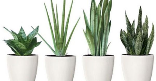 Small Space Chicago House Plant For My Bedroom Plants Plant Decor House Plants Indoor