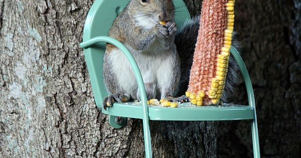 squirrel chair!!! Ohhhh Adorable ! Loves trees !!!! Me too!!!!