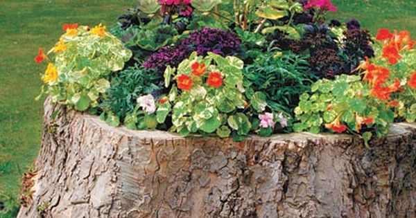 Tree Stump Planter Drill Out The Middle Of An Old Stump And Fill With Dirt And Plants Tree Stump Planter Front Yard Landscaping Design Plants