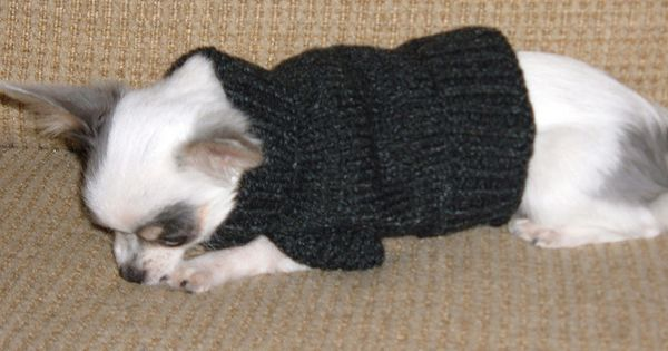 Maci S Sweater 2 By Herzogbr Via Flickr For Pets
