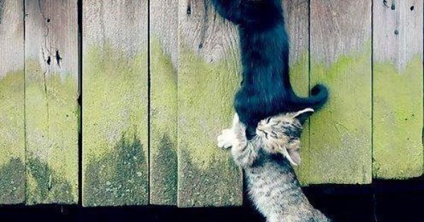 animals helping each other - photo #43
