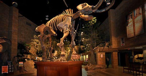 Creation Museum In Kentucky Baby Mastadon Found In