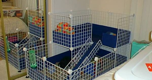 15 top c c cage designs for your guinea pigs good ideas for Where to get c c cages