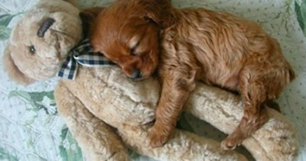 so cute, puppies love teddies as much as we do