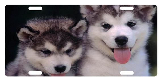 Alaskan Malamute Custom License Plate Canine Emblem Puppies