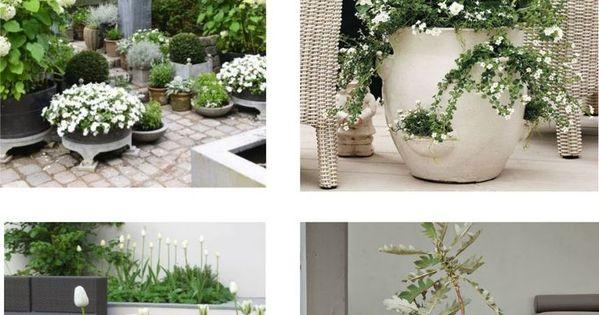 Biale Kwiaty Na Tarasie Balkon I Taras Z Bialymi Biale Bialymi Kwiaty Na Pockets Taras Tarasiebalkon Vorgarten Ideen Hinterhofideen Garten