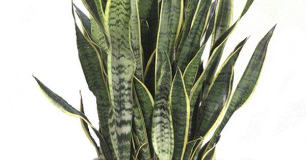 Plantes d polluantes d pollution de l air int rieur par les plantes salle d - Depollution par les plantes ...